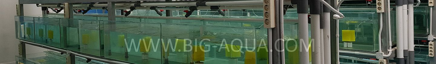 About Us Company Profile live tropical fish export