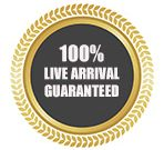 <b>Why Choose Us</b> Guarateed Live Arrival For Worldwide Shipping live tropical fish export guaranteed