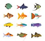 <b>Why Choose Us</b> Wide Variety of Rare Exotic and Captive Breed Fishes live tropical fish export indonesia